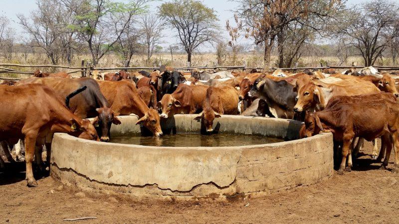 cattle 2771153 1920 800x450 - Nimbus – Suministro Remoto
